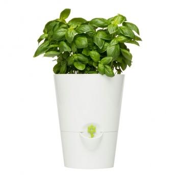 Doniczka Na Zioła Emsa Fresh Herbs Biały