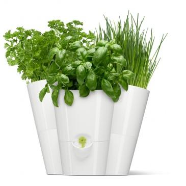 Doniczka Na Zioła Potrójna Emsa Fresh Herbs Biały