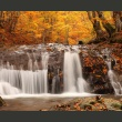 Fototapeta - Autumn landscape: waterfall in forest A0-F5TNT0008-P