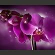 Fototapeta - Baśń i orchidea A0-F4TNT0078-P