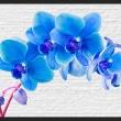 Fototapeta - Błękitne pobudzenie A0-XXLNEW010393