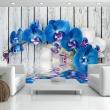 Fototapeta - Kobaltowa orchidea A0-XXLNEW010120