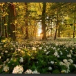 Fototapeta - Leśna flora A0-XXLNEW011084