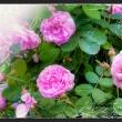 Fototapeta - Letni ogród A0-XXLNEW010776