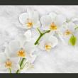 Fototapeta - Liryczna orchidea - biel A0-XXLNEW010376