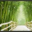 Fototapeta - Magiczny świat zieleni A0-XXLNEW010250