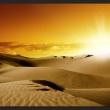 Fototapeta - Marsz wielbłądów A0-XXLNEW010414