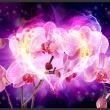 Fototapeta - Orchidee w płomieniach A0-XXLNEW010331