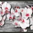 Fototapeta - Oziębłe orchidee A0-XXLNEW010223