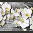 Fototapeta - Oziębłe orchidee III A0-XXLNEW010224