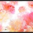 Fototapeta - Pastelowe piwonie A0-XXLNEW010923