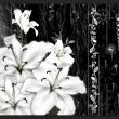 Fototapeta - Płaczące lilie A0-XXLNEW010388