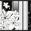 Fototapeta - Płaczące lilie w bieli A0-XXLNEW010389