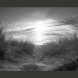 Fototapeta - plaża (czarno-biały) A0-XXLNEW01010