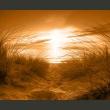 Fototapeta - plaża (sepia) A0-XXLNEW010102