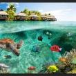 Fototapeta - Pod powierzchnią wody A0-XXLNEW010773