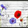 Fototapeta - Polne kwiaty A0-XXLNEW010300