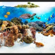 Fototapeta - Rafa koralowa A0-XXLNEW010549