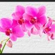 Fototapeta - Różowe pobudzenie A0-XXLNEW010392