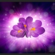 Fototapeta - Tchnienie wiosny A0-XXLNEW010505
