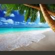 Fototapeta - Tropikalna wyspa A0-XXLNEW010155