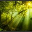 Fototapeta - W tajemniczym lesie A0-XXLNEW011429