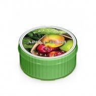 Kringle Candle - Apple Basil - Świeczka zapachowa - Daylight (35g)