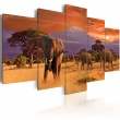 Obraz - Afryka: słonie A0-N3071