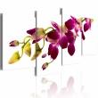 Obraz - Blask orchidei A0-N2203