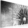 Obraz - dmuchawiec (czarno-biały) A0-N2626