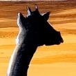 Obraz - Dzika Afryka A0-N3365