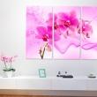 Obraz - Eteryczna orchidea - róż A0-N2976