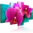 Obraz - Exotic orchids A0-N2354