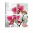 Obraz - Fantazyjna orchidea A0-N1933
