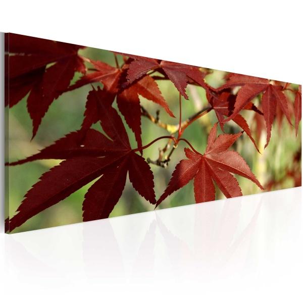 Obraz - Kolor jesieni (120x40 cm) A0-N1243
