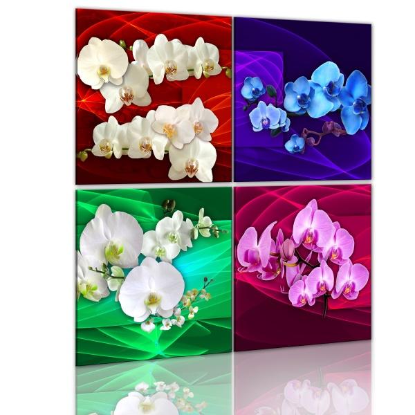 Obraz - Kolorowe orchidee (40x40 cm) A0-N1259