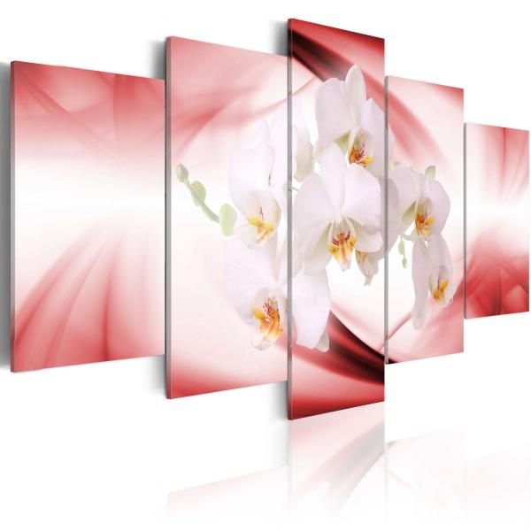 Obraz - Kwiat orchidei w różu i bieli (100x50 cm) A0-N1334