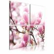 Obraz - Kwitnące drzewo magnolii A0-N1929