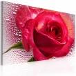 Obraz - Lady Rose A0-N2244