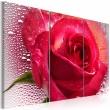 Obraz - Lady Rose - triptych A0-N2251