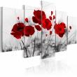 Obraz - maki - czerwony  cud A0-N2631