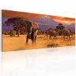 Obraz - Marsz afrykańskich słoni A0-N3098