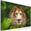 Obraz - Oczy dżungli A0-N2945