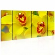 Obraz - Orchids - intensity of yellow color A0-N1979