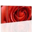 Obraz - Passionate rose A0-N1978