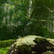 Obraz - Piękno lasu A0-N3777