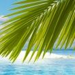 Obraz - Rajska wyspa A0-N3366