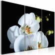 Obraz - Śnieżnobiała orchidea A0-N2297