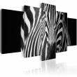 Obraz - Spojrzenie zebry A0-N3135