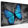 Obraz - Studium motyla - tryptyk A0-N2698